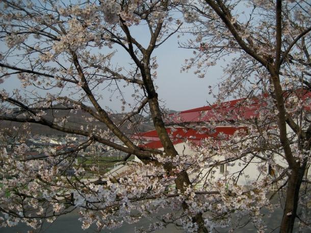 Japan Spring 2007 050