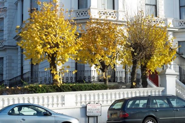 Holland Park Houses - Autumn Colours