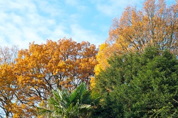 Trees Holland Park