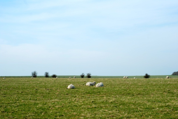 Sheep near Stonehenge - Wiltshire, England