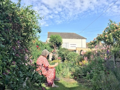 Garden Life - Faversham