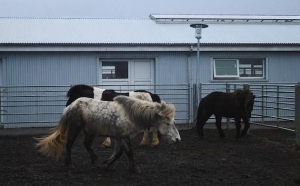 Icelandic Horse Vol 2 - Reyjkavik to Vik - Iceland