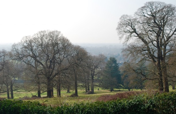 Richmond Park - Spring